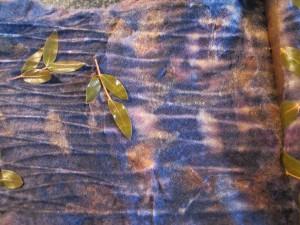 eucalyptus in blauwhout